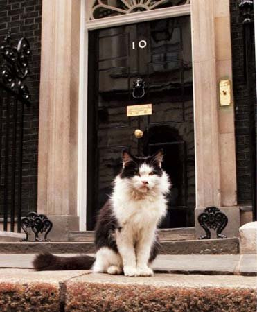 Humphrey, húsköttur í Downingstræti 10.