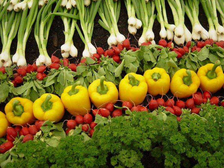 organic-farming.jpg